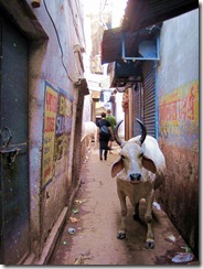 resizedIMG_2693Jaipur